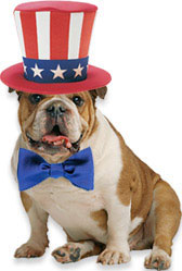 dog uncle sam