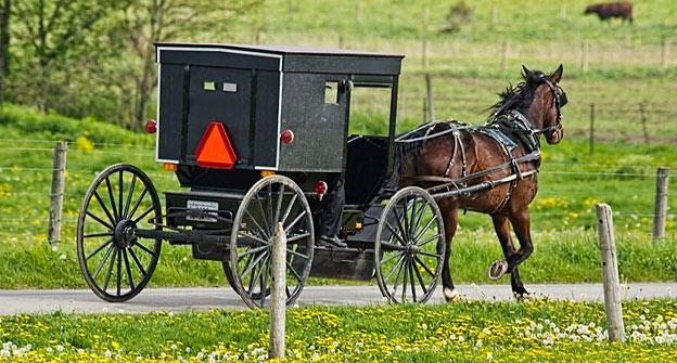 amish taxes horse
